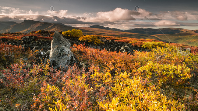 Fall colors blaze in the hills behind Keno City, Yukon Territory, Canada