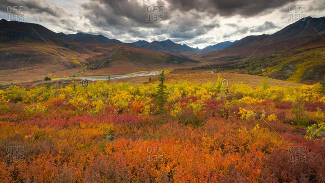Fall colors blaze across Tombstone Territorial Park, Yukon Territory, Canada