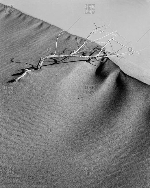 Bare tree branch on top of a sand dune