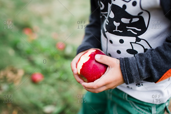 Boy holds apple in orchard