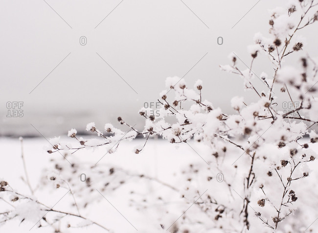 Plant covered in snow