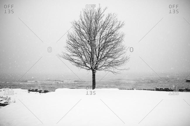 Lone tree in winter