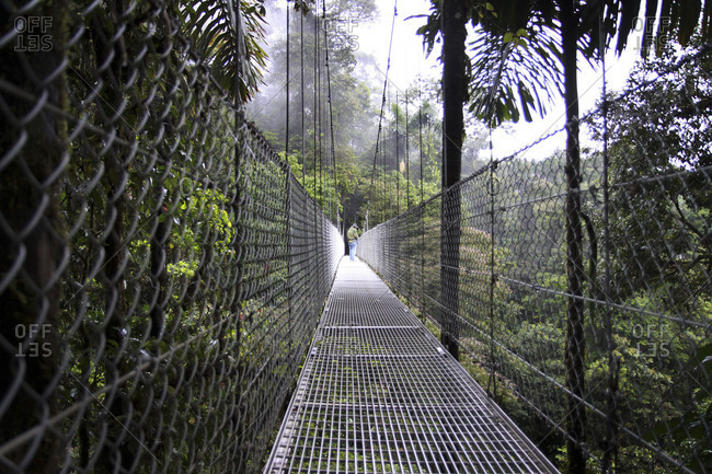Man standing on a suspension bridge in a Costa Rican jungle