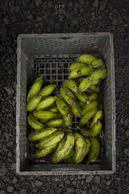 Fresh bananas in a gray box against volcanic stones
