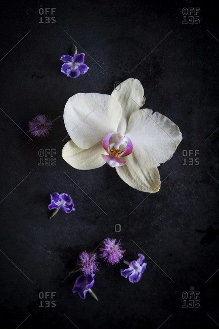 A collection of pink white and purple orchids and flowers against a dark background