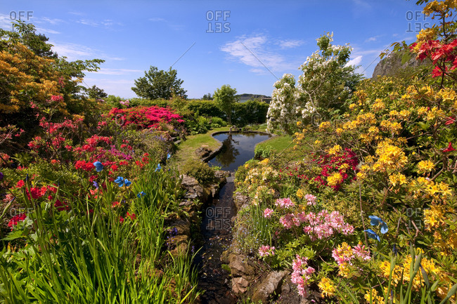 Spring garden at An Cala in Easdale Village, Argyll, Scotland
