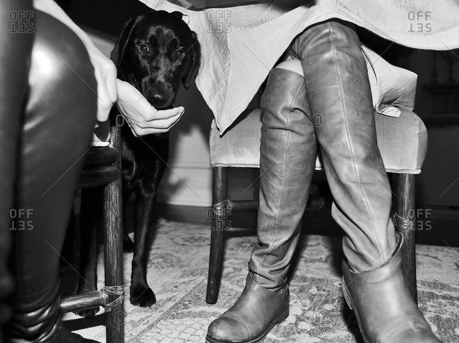 Guests feeding a dog under the table