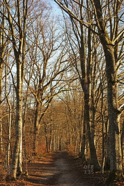 Beech Forest, Swabian Alb, Baden-Wurttemberg, Germany, Europe
