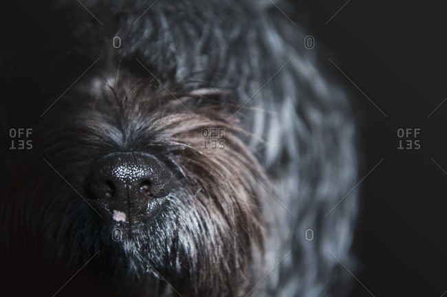 Close up of the muzzle of a dog