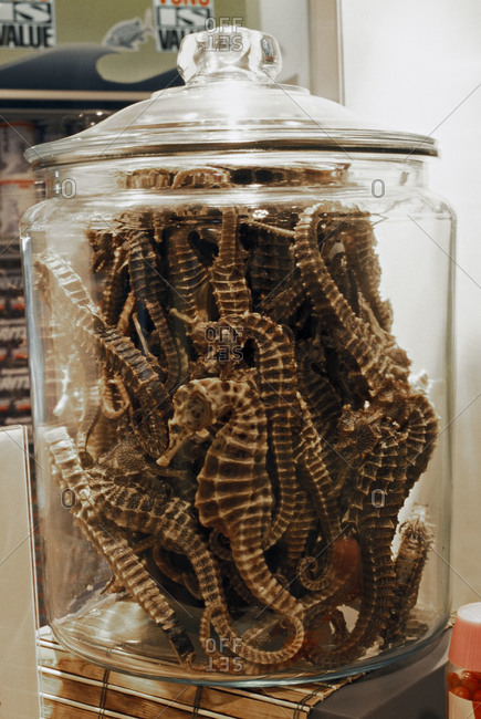 Dried seahorses in a glass container