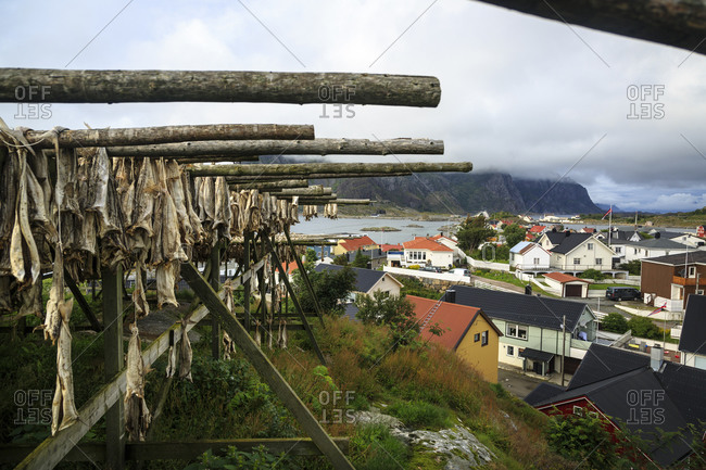 Cod fish drying, Henningsvaer village, Lofoten Islands, Norway.