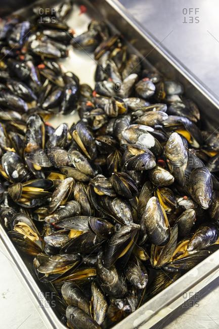 Mussels in preparation at restaurant, Henningsvaer, Lofoten Islands, Norway.