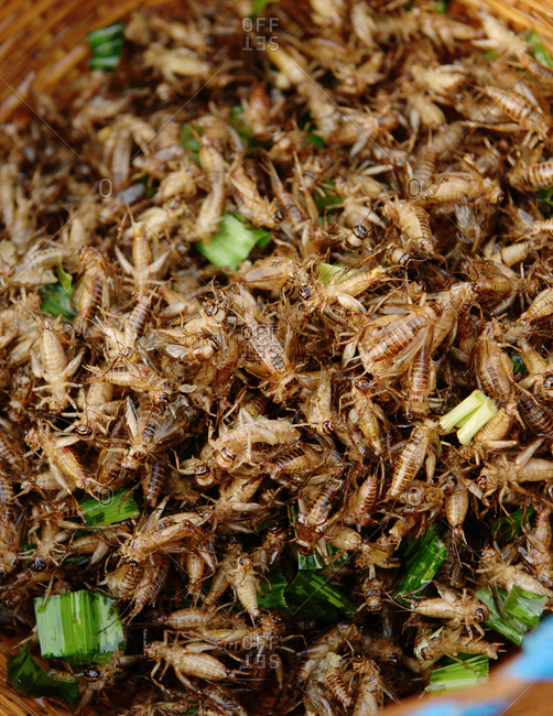 Close up of fried crickets