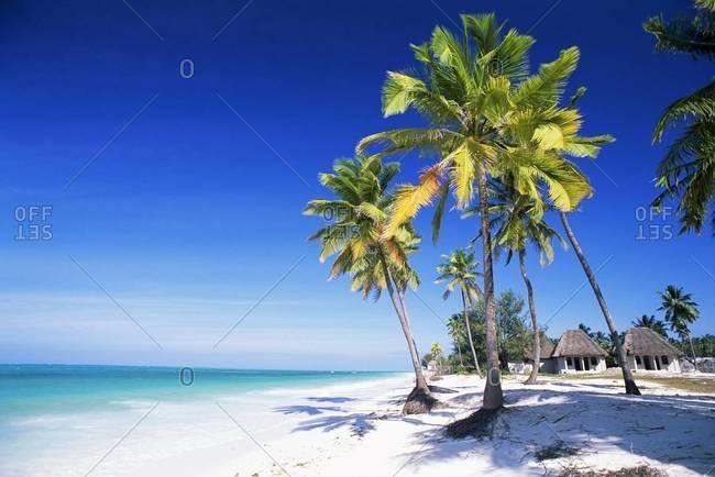 Palm trees, white sandy beach and Indian Ocean, Jambiani, island of Zanzibar, Tanzania, East Africa, Africa