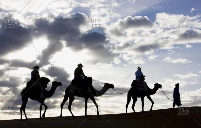 Silhouette of Berber man leading three camels along the ridge of a sand dune in the Erg Chebbi sand sea near Merzouga, Morocco