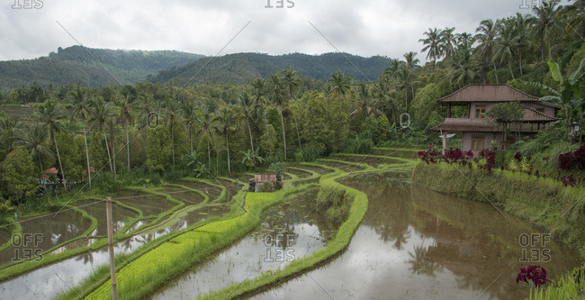 A house next to terraced rice fields in Munduk, Bali, Indonesia
