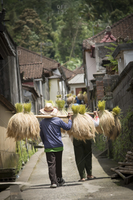 Farmers carry harvested rice back to their village in Bali, Indonesia