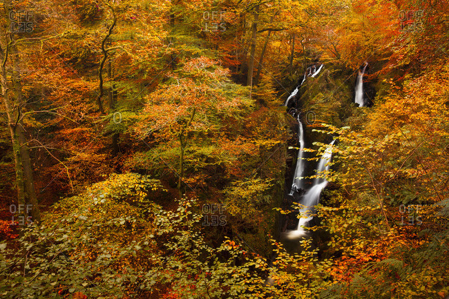 Stock Ghyll Force Waterfall in autumn, Lake District National Park, Cumbria, England, United Kingdom, Europe