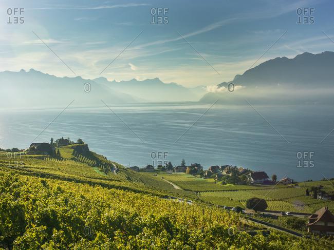Lavaux terraced vineyards on Lake Geneva, Montreux, Canton Vaud, Switzerland