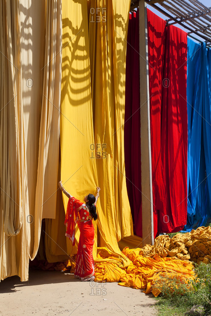 Woman in sari checking the quality of freshly dyed fabric hanging to dry, Sari garment factory, Rajasthan, India, Asia