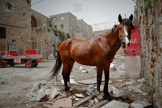 Horse standing at a derelict neighborhood in Gerusalem, Israel