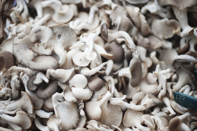Heap of fresh mushrooms