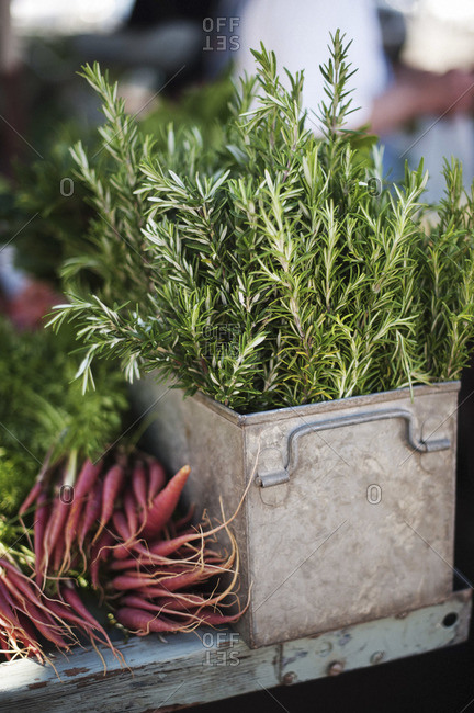 Rosemary and carrots for sale at a market