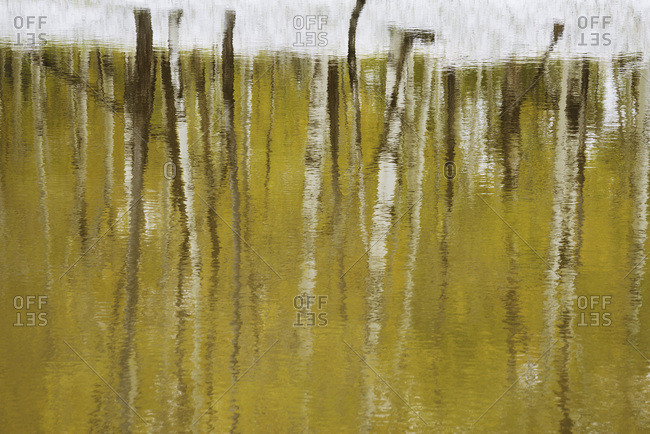 Aspen trees reflect on the rippled surface of a pond in northern Arizona.