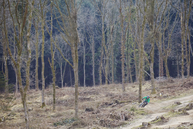 Downhill Mountain Biker.Single man racing downhill, Forest of Dean,UK