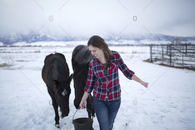 A young woman tempts her horses with oats on a winter day.