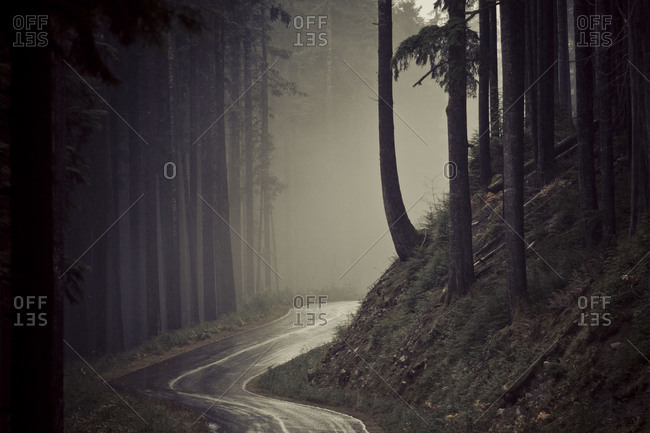 Road turning in the forest