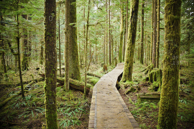 Nature trail through forest - Offset