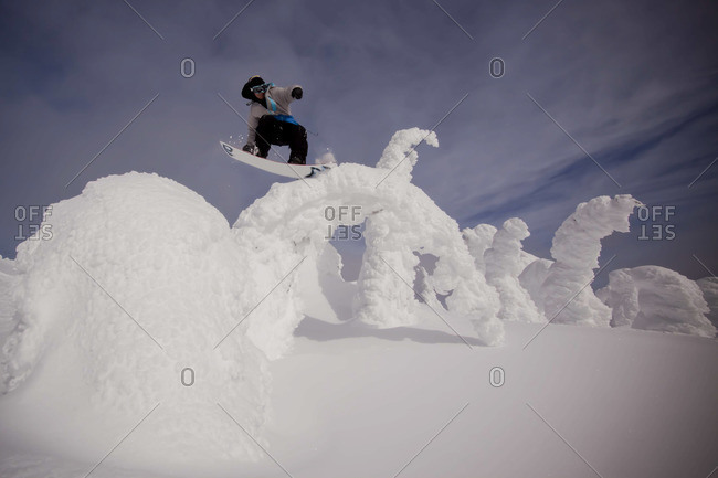 A snowboarder jibs on a bent over tree on a sunny winter day.