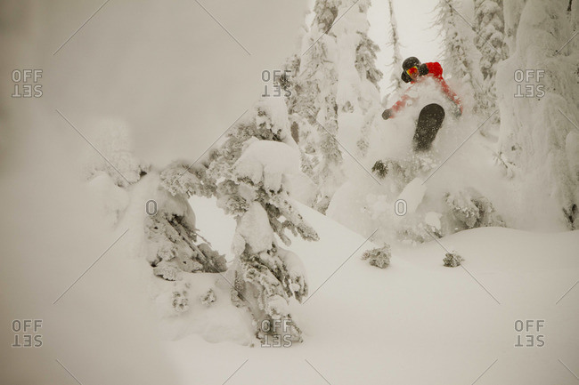 A snowboarder bursts through some powder amidst snowcoated trees on a foggy winter day.