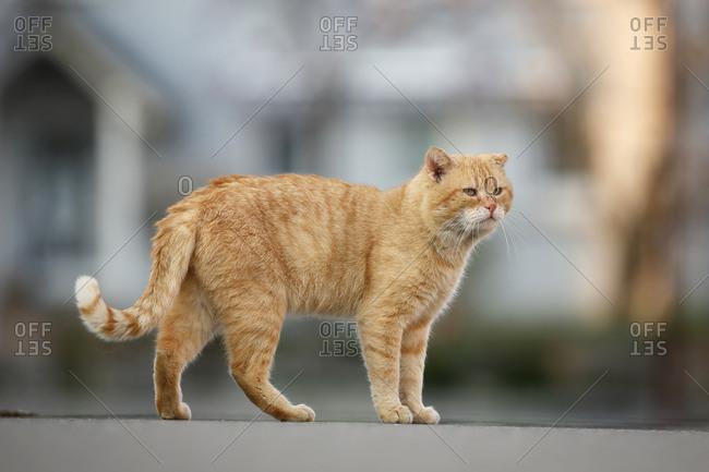 Tomboy standing on street - Offset