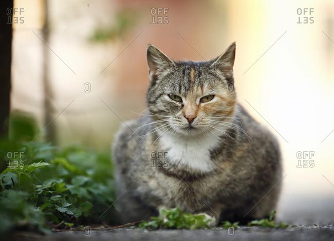 Tabby cat lying at wayside