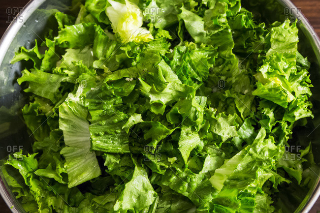 Green leaf lettuce, overhead view