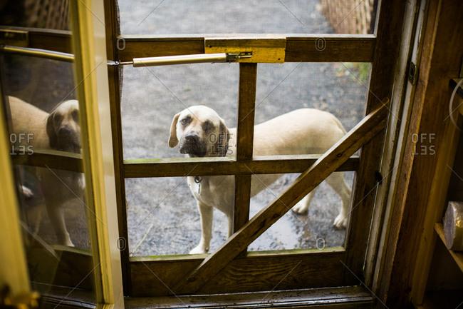 A dog peers through a door