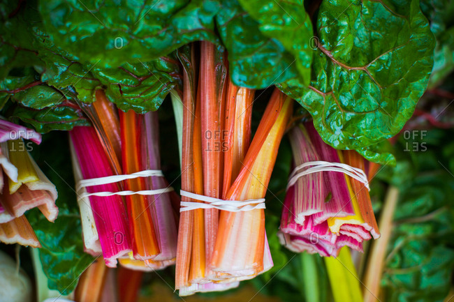 Close up of freshly picked swiss chard