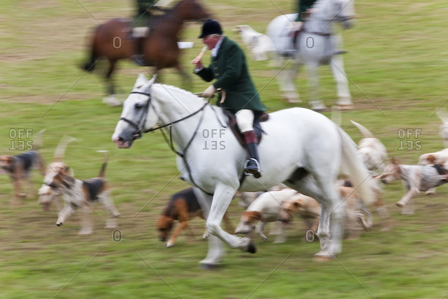 Gloucestershire, UK - August 8,2010: Fox hunting