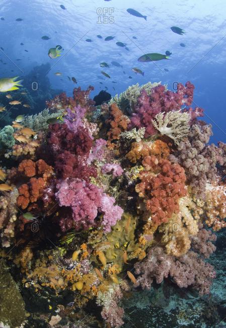 Coral reef, Raja Ampat, Indonesia