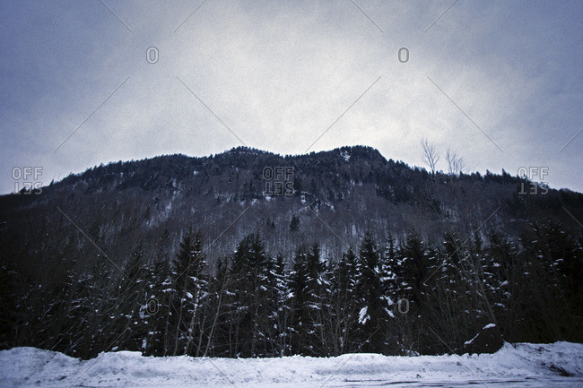 Winter forest at a mountain
