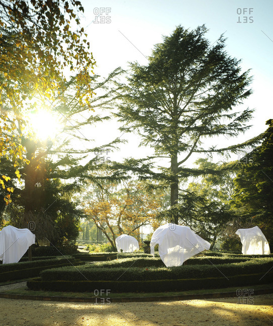 White sheets covering trees in a garden