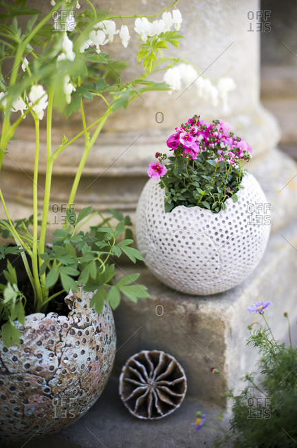 Flowers growing in decorative pots in garden