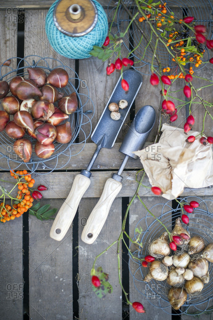 Crops and garden tools arranged on wooden table