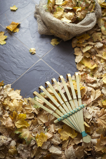 Collecting autumn leaves with rake