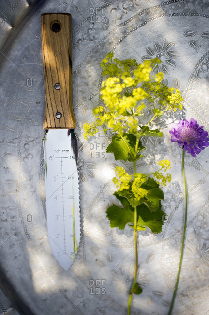 Cut flowers and hori-hori knife on tray