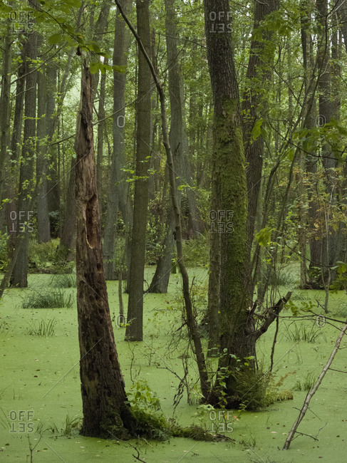 Trees in swamp area