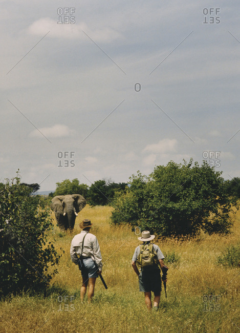 Encounter with an elephant on a safari in the Masai Mara National Reserve in Kenya