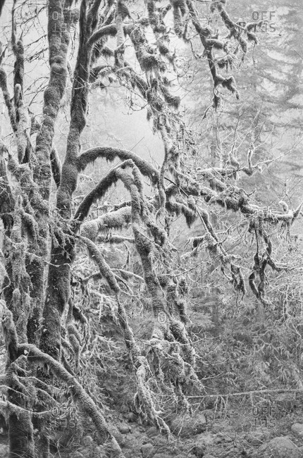 Close-up of tree covered in ice and snow